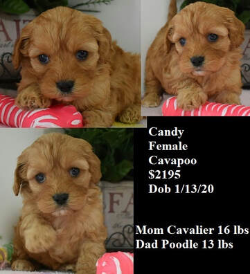 Superior Hilltop Kennel Home Raised Puppies - www